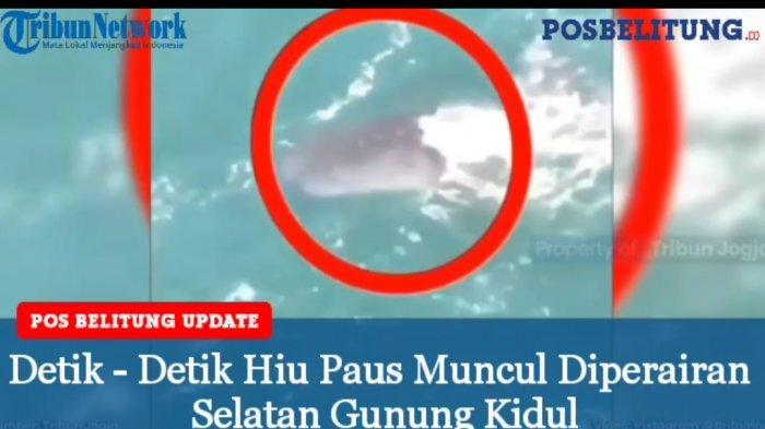 Video - Seekor Hiu Paus Muncul di Perairan Selatan Gunung Kidul, Viral di Medsos