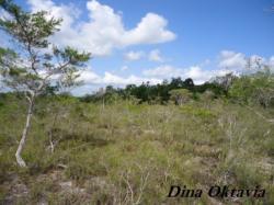 Sisi Lain Potensi Kekayaan Alam Pulau Belitung