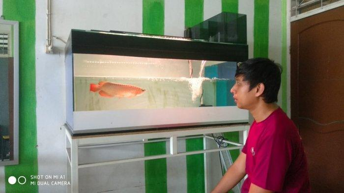 Komunitas Pecinta Ikan Hias dan Predator Belitung, Ikan Cana Belitung Mulai Jadi Tren