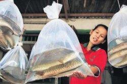 Rugi Kalau Gak Tahu, Cuma Konsumsi Ikan Jenis Ini Manjur Obati Diabetes!