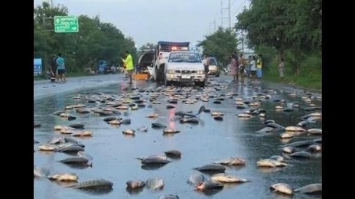 Ribuan Ikan Tiba-tiba Menggelepar-gelepar di Jalanan Saat Hujan, Dikaitkan Fenomena Supranatural