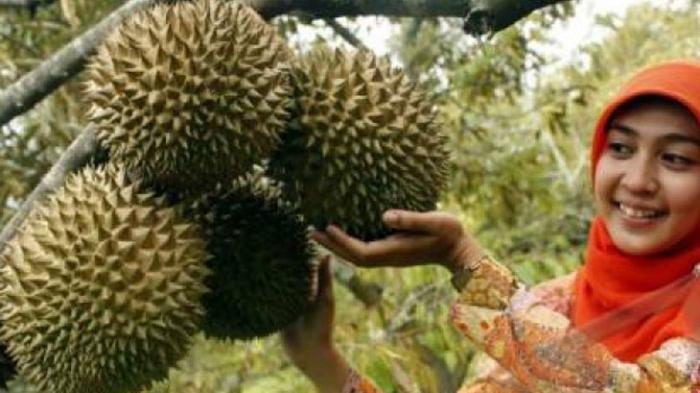 Durian Ini Terjual Seharga Rp 685 Juta di Pelelangan, Seenak Apa, Sih?
