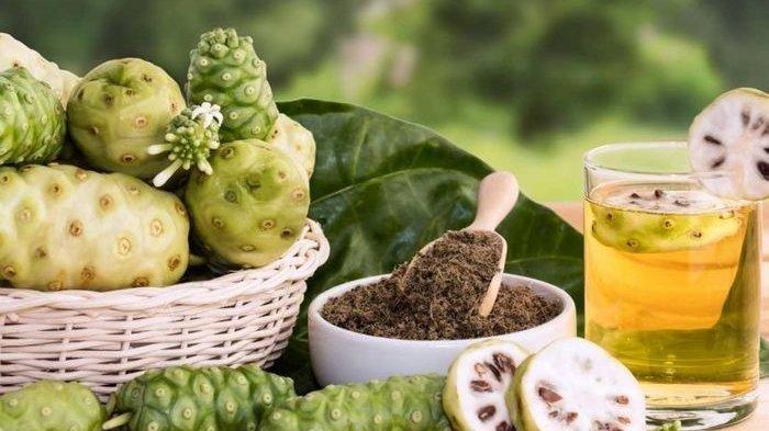 Rutin Minum Jus Mengkudu Ternyata Bisa Cegah Penyakit Mematikan Ini dari Tubuh, Yuk Dicoba