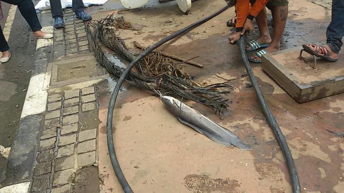 Ada Linggis dan Ikan Lele di Saluran Air Jalan Medan Merdeka Selatan