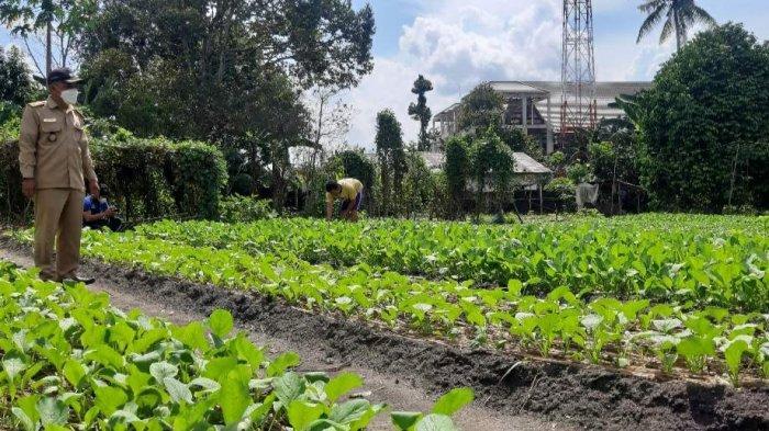 CEK AREA PERTANIAN - Kepala Desa Aik Ketekok, Antoni mengecek area pertanian warga. Pos Belitung/Dede S