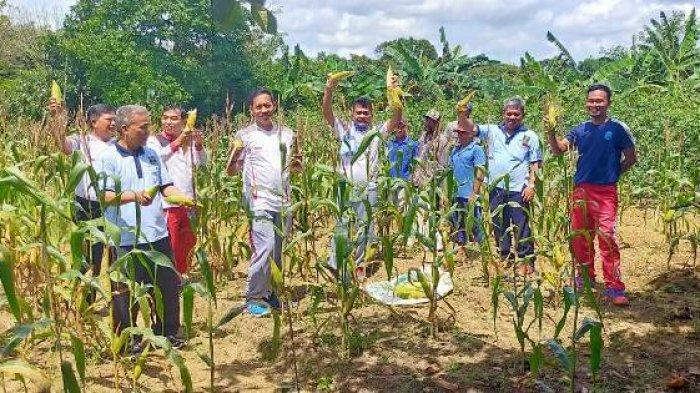 Kalapas Tanjungpandan Bersama WBP Panen Jagung 150 Kg dan Kacang Panjang 15 Kg