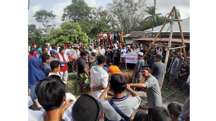 Warga Kecamatan Gantung Antusias Lihat Proses Penyembelihan Sapi Limosin, Bantuan Kurban Presiden RI