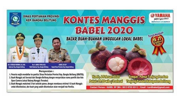 Usai Kontes Durian, Distan Babel Kembali Gelar Kontes Manggis Berhadiah Total Rp 15 Juta di Belitung