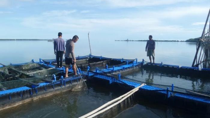 Tahun 2019 Sudah Lima Kali Ekspor Ikan Kerapu ke Hongkong, Sekali Pengiriman 15 Ton