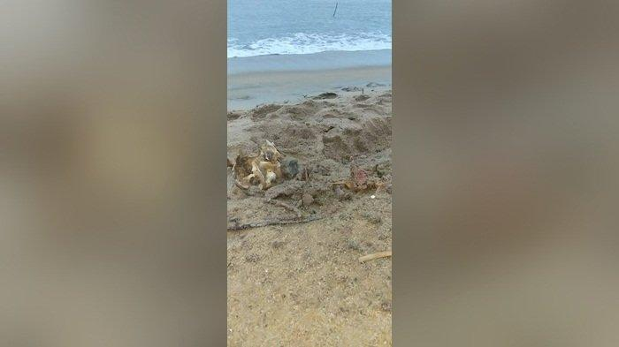 Kronologis Warga Temukan Kerangka Manusia di Pinggir Pantai, Diduga Sudah Meninggal Tiga Minggu Lalu