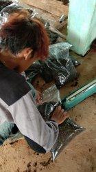 Satu Kali Produksi Pengelolaan Sampah di TPA Gunung Sadai Belitung Bisa Mencapai 400 Kilogram Kompos