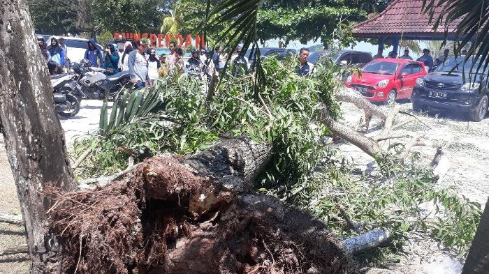 Pohon Akasia Tumbang Timpa Kendaraan, Pengelola Taman Hiburan Tanjungpendam Akan Bertanggungjawab