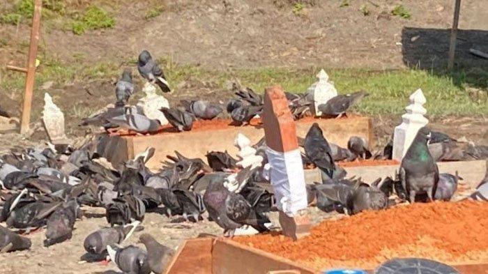 Makam ayah Siti setiap hari selalu dikerubungi ratusan burung merpati
