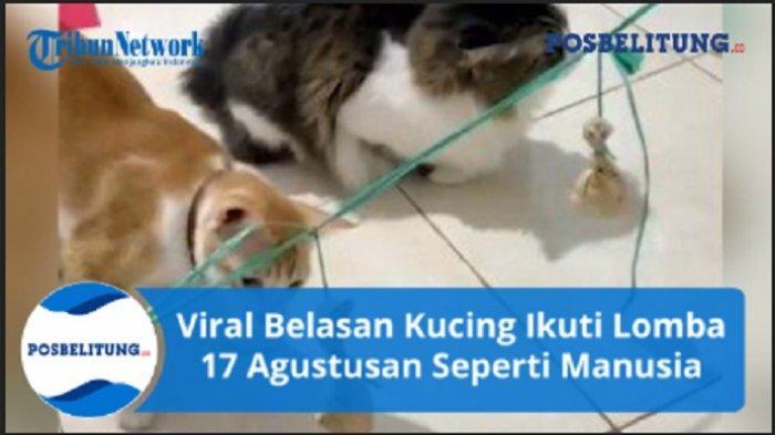 Viral Belasan Kucing Ikuti Lomba 17 Agustusan Seperti Manusia