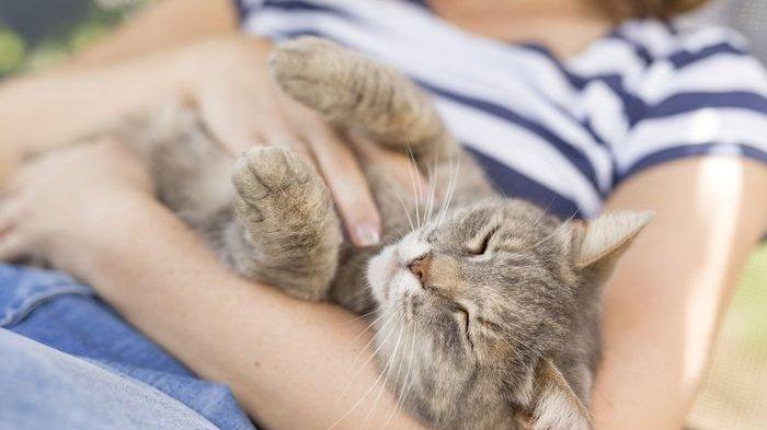 Jangan Senang Kalau Mimpi Kucing, Bersiaplah Sabar dan Sengsara, Kantong Bocor Rejeki Seret