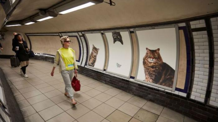 Ruang Iklan di Stasiun Kereta London Diganti Foto Kucing!