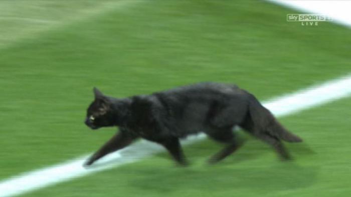 Kucing Hitam Ini Masuk Lapangan, di Laga Liverpool VS MU, Jadi Mitos Pembawa Sial?