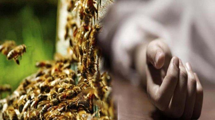 Sopir Angkot Disengat Lebah, Meninggal Dunia saat Dirawat di Ruang Isolasi Covid-19