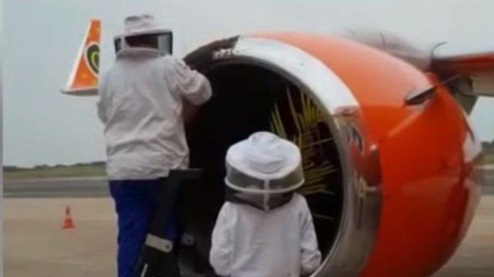 Penerbangan Maskapai Ini Terpaksa Ditunda Gara-gara Puluhan Ribu Lebah 'Bersantai' di Mesin Pesawat