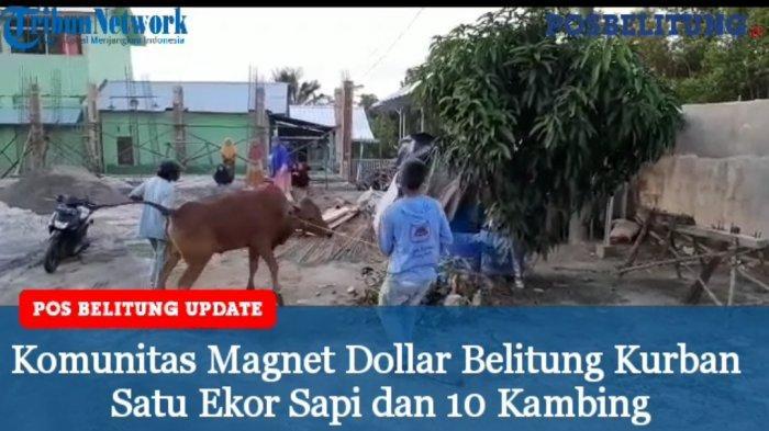 Video - Komunitas Magnet Dollar Belitung Berbagi Hewan Kurban