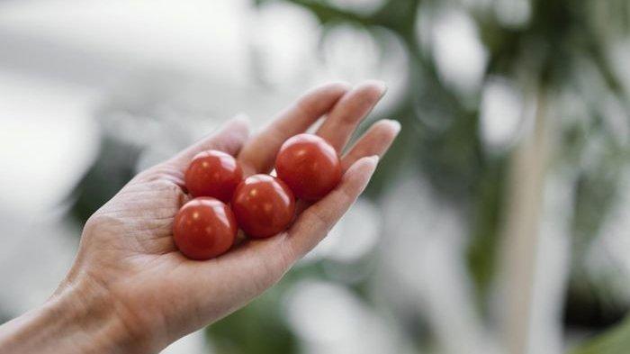 Jangan Lagi Menolak Tomat! Cuma Makan Satu Buah Sehari Rasakan 5 Khasiat Ajaibnya