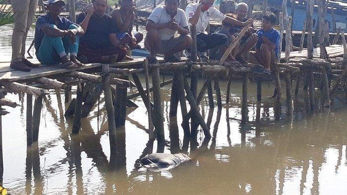 BREAKING NEWS: Mayat Mengapung di Sungai Pangkalarang Pangkalpinang