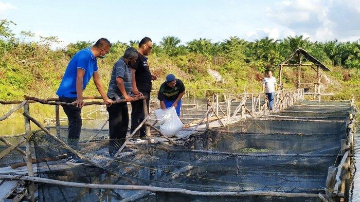Satu Ton Lele dan Nila Terjual, Kelompok Nila Berjaya Kampanyekan Nikmatnya Ikan Air Tawar di Medsos