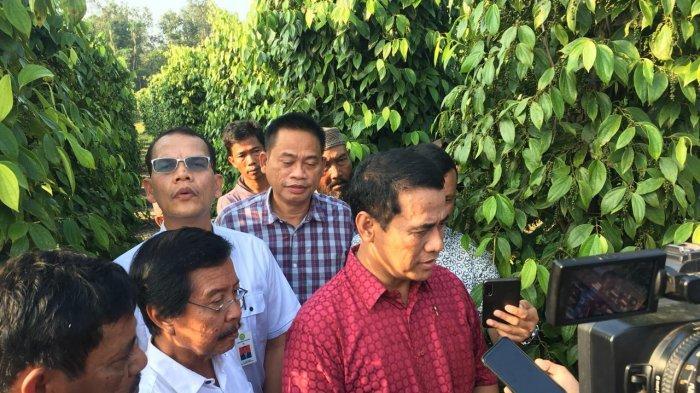 Produksi Lada di Belitung Pada 2020 Mencapai 50.000 Ton