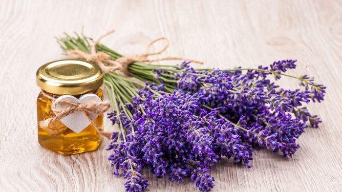 Teguk Segelas Campuran Bunga Lavender dan Buah Satu Ini Dijamin Sakit Kepala Langsung Sirna!