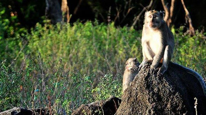 Wajib Tahu, Jangan Lakukan 3 Hal Ini saat Liburan ke Taman Nasional.