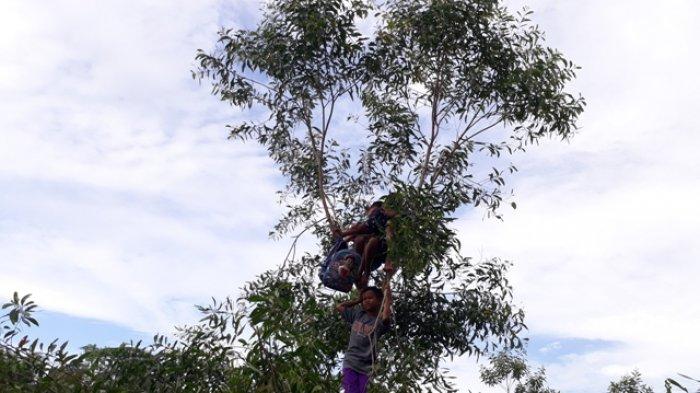 3 Bocah Tonton MXGP Dari Atas Pohon
