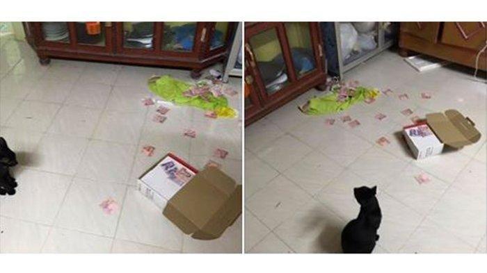 Terbongkar! Ngakunya Tak Punya Uang, Tabungan Rahasia Suami Terungkap Berkat Kucing Peliharaannya