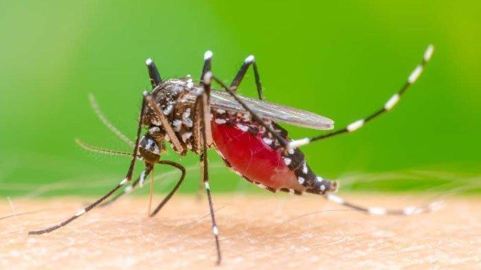 Patut Waspada! Jam-jam Ini Ternyata Nyamuk Demam Berdarah Sering Menggigit