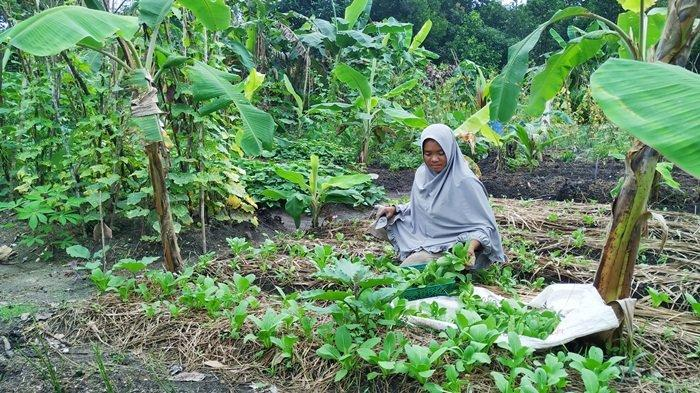 Ibu Rumah Tangga Ini Manfaatkan Belakang Rumah untuk Bertanam Sayur