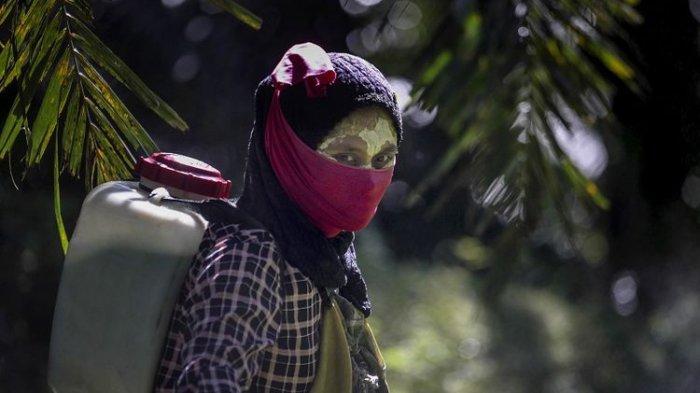 Laporan Media AS, Pelakuan Brutal ke Pekerja Wanita di Perkebunan Sawit Indonesia dan Malaysia