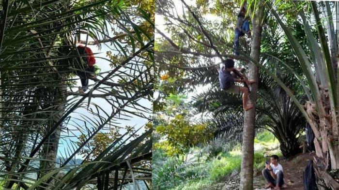 Kisah Siswa Harus Manjat Pohon Demi Sinyal Untuk Belajar Online, Renni: Andaikan Signal Bisa Dibeli