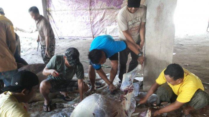 DLH Belitung Minta Pembagian Daging Kurban Gunakan Kantong Berbahan Daun Simpur dan Tali Purun