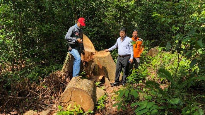 Ada 13 Keping Papan Hasil Pembalakan Liar di Hutan Produksi Gunung Duren Beltim