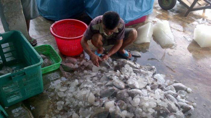 Aktivitas Ekspor Ikan Beltim Sepi, Yuk Cari Tahu Penyebabnya