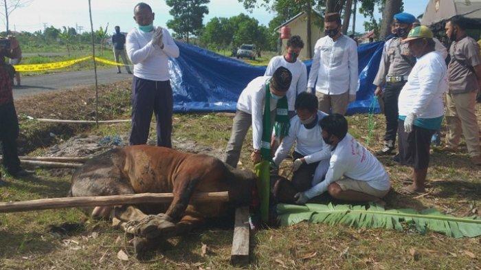 Polres Beltim Sembelih 14 Hewan Kurban, Targetkan 1.000 Kantong Daging untuk Masyarakat