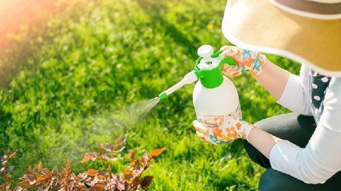 Cara Membuat Pestisida Alami dari Bumbu Dapur Buat Berantas Hama Tanaman