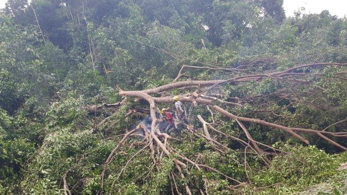 PLN Harap Masyarakat Kasih Izin Tebang Pohon yang Bahayakan Jaringan Listrik