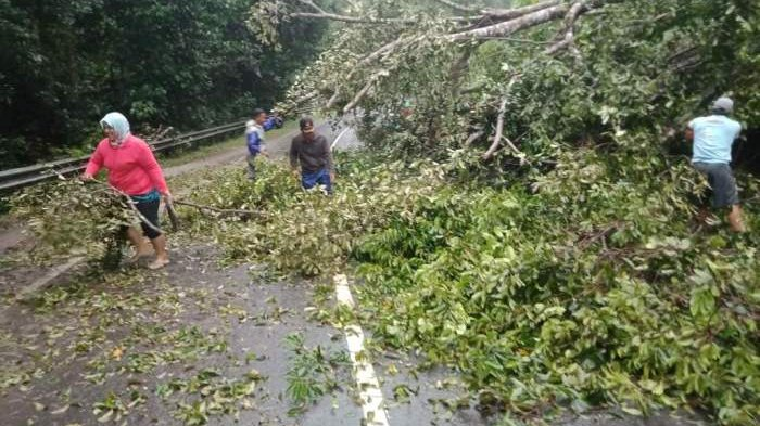 Hujan Deras Guyur Pulau Belitung, Tiang Listrik dan Pohon Tumbang, Jalan Genting Apit Sempat Macet