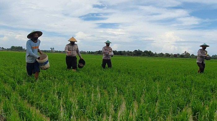 Kepala DKPP Kabupaten Belitung Ingatkan Petani untuk Antisipasi Musim Hujan di Lahan Pertanian