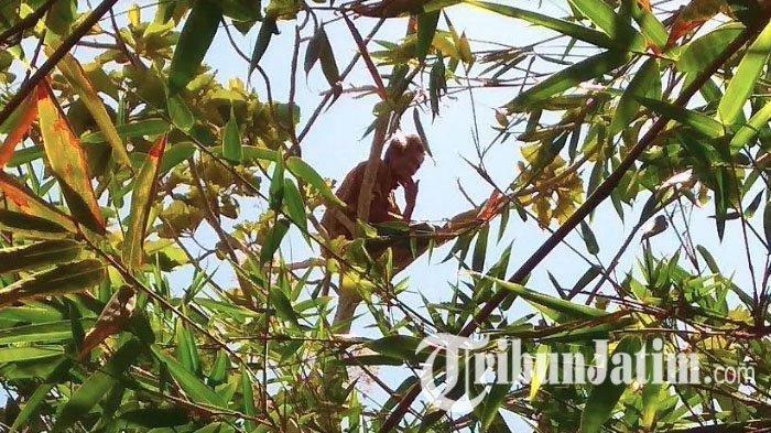Sudah 3 Hari, Pria Tulungagung Ini Sholat dan Tinggal di Pohon, Warga Ungkap Masa Lalu & Penyebabnya