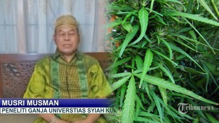 Profesor dari Aceh ini Sebut Ganja Bisa Obati 30 Penyakit, dari Virus hingga Kanker, Begini Jelasnya