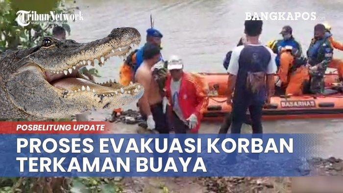 Serangan Buaya di Bangka Belitung, 4 Warga Jadi Korban, 3 Orang Tewas Mengenaskan