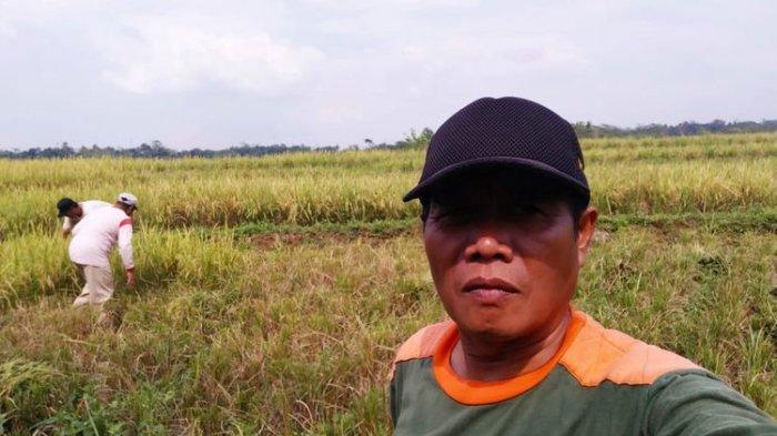 Petani Teriak Pupuk Subsidi Hilang di Pasaran, Kartu Tani Kurang Maksimal