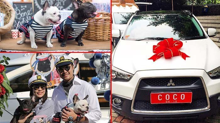 Anjingnya Ulang Tahun, Pengusaha Muda Indonesia Ini Beri Kado Mobil Pajero!