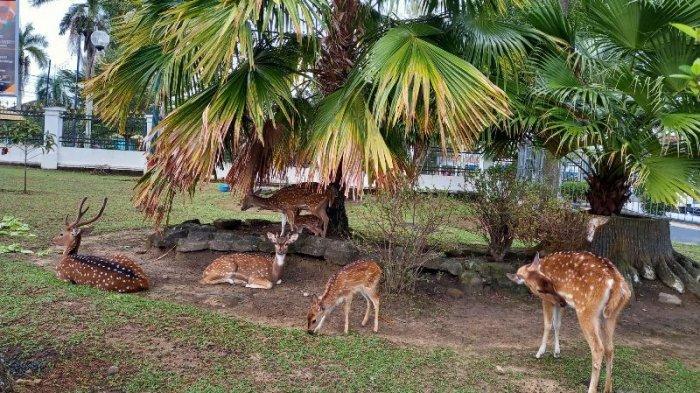 Wali Kota Pangkalpinang Sedih Tak Bisa Selamatkan Satu Rusa Totol di Mini Zoo Rumah Dinas